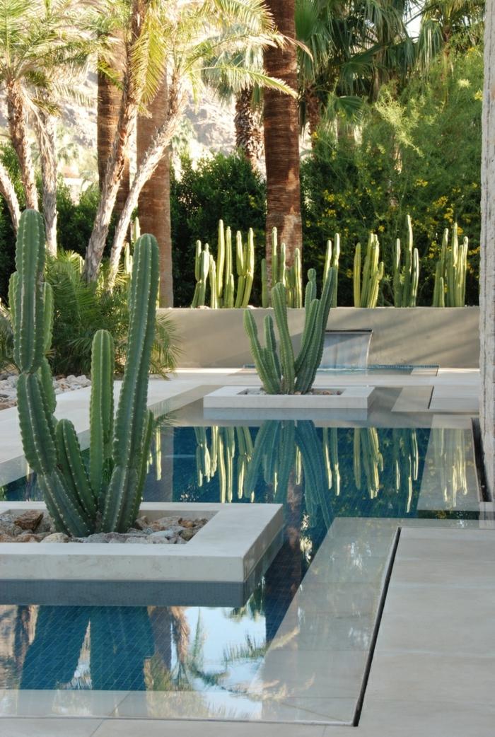 exotischer landschaftsgarten zu hause, kleiner pool, viele kaktus pflanzen kakteen, palmen, tropischer garten
