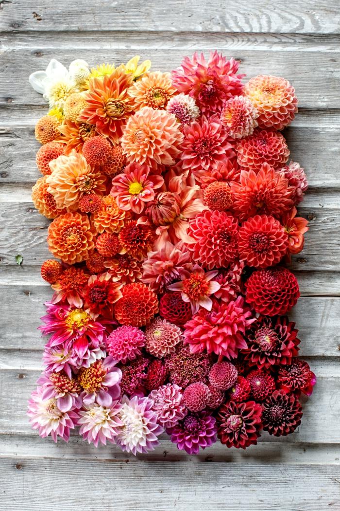tischdeko selber machen, bunte blumengestaltung je nach der farbe geordnet, satte farben von der natur, rosa, lila, orange, gelb
