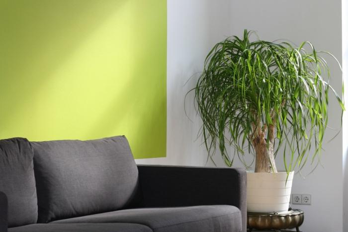 grüne Wand, schwarzes Sofa, Bonsei Baum, Wohnideen Wohnzimmer