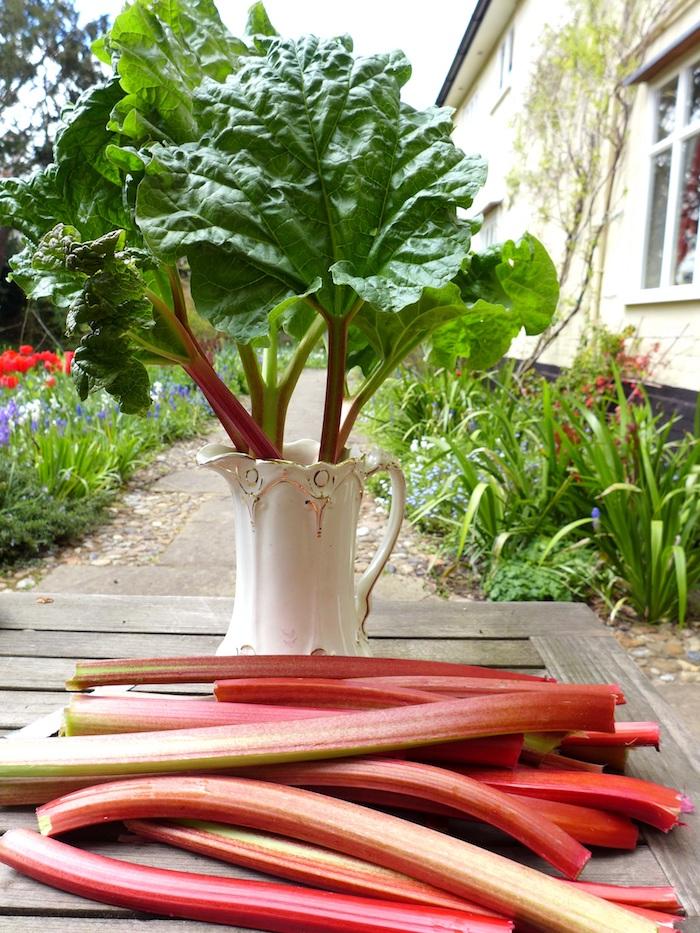 eine weiße vase mit langen roten rhabarber pflanzen mit grünen blättern, ein tisch aus holz und mit langen roten rhabarber pflanzen, garten mit roten tulpen und violetten blättern