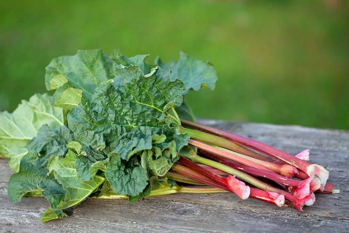 rhabarber erntzeit, ein tisch aus holz und viele lange rote rhabarber pflanzen mit großen grünen blättern, ein garten mit rhabarber pflanzen, rhabarber ernten