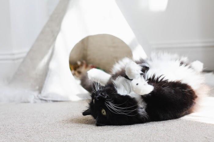 ein grauer teppich und eine schwarze katze mit grünen augen, ein kleines weißes katzenzelt, weißes tipi für katzen selber bauen
