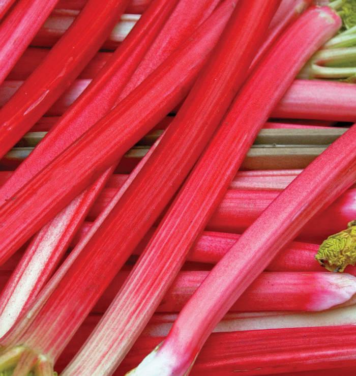 viele lange geschnittene rote rhabarber pflanzen, wie lange kann man rhabarber ernten, rhabarber erntzeit