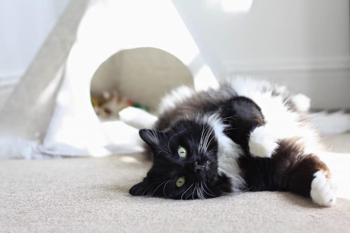eine katze mit grünen auhen und ein grauer teppich, ein kleines weißes tipi zelt für katzen und mit einem weißen stoff, katzenzelt selber bauen