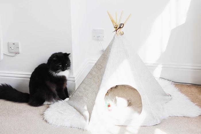 eine schwarze katze mit grünen augen, ein zimmer mit weißen wänden und einem beigen teppich, ein kleines weißes zelt für katzen und mit langen stöcken aus holz, katzenzelt selber bauen