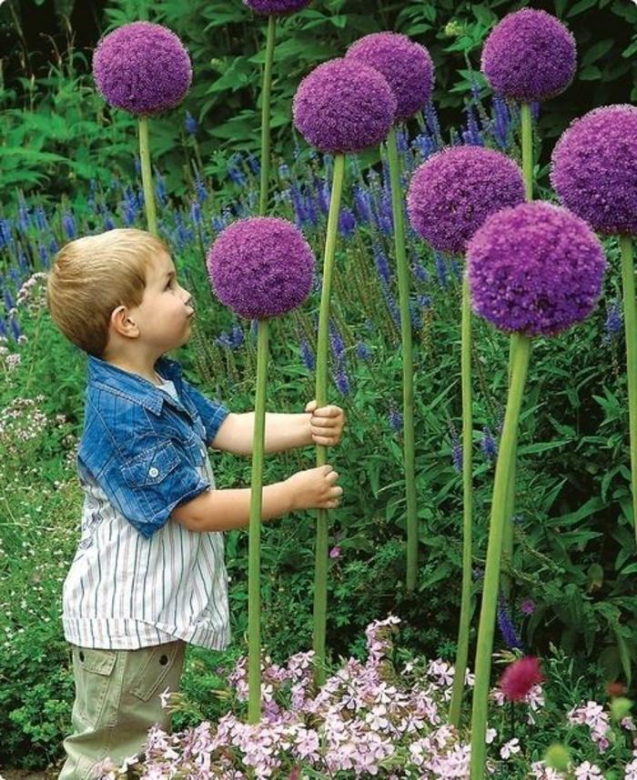 ein kleines kind im garten, junge pflückt blumen als geschenk für seine mama, englischer garten pflanzen,