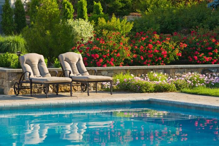 garten englischer stil, pool und viele bunte rosenpflanzen, rote blumen im garten, zwei liegestühle mit bequemer sitzfläche