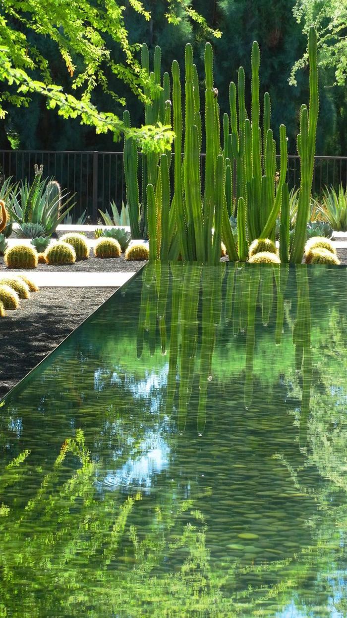kleiner teich, garten englischer stil, kaktus kakteen pflanzen im garten, einfach zum pflegen und immer grün die perfekte gartenausstattung