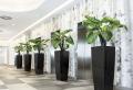 Große Pflanzgefäße für den Innen- und Außenbereich