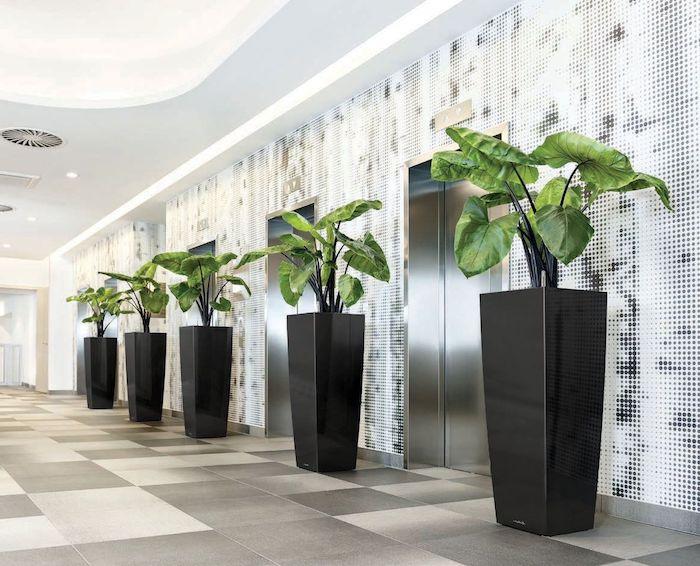 große schwarze pflanzgefäße als deko, grüne pflanzen, office dekorieren, graue fliesen