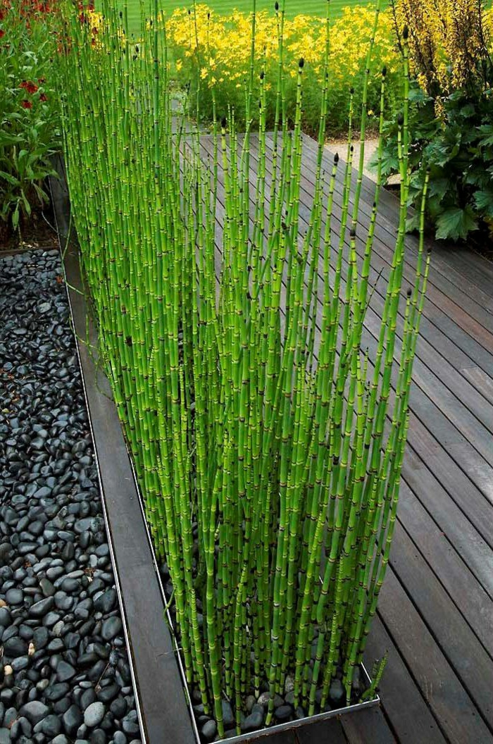 schöne ideen für landschaftsgarten mit bambus pflanzen, glück bringend, schwarzer kies, holzweg von der wohnung in den garten