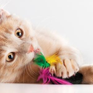 76 kreative Ideen, wie Sie ein Katzenspielzeug selber machen