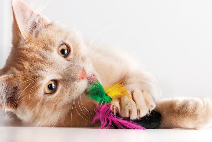 katzenspielzeug selber machen, kleine katze die spielt, selbstgemachtes spielzeug mit bunten federn