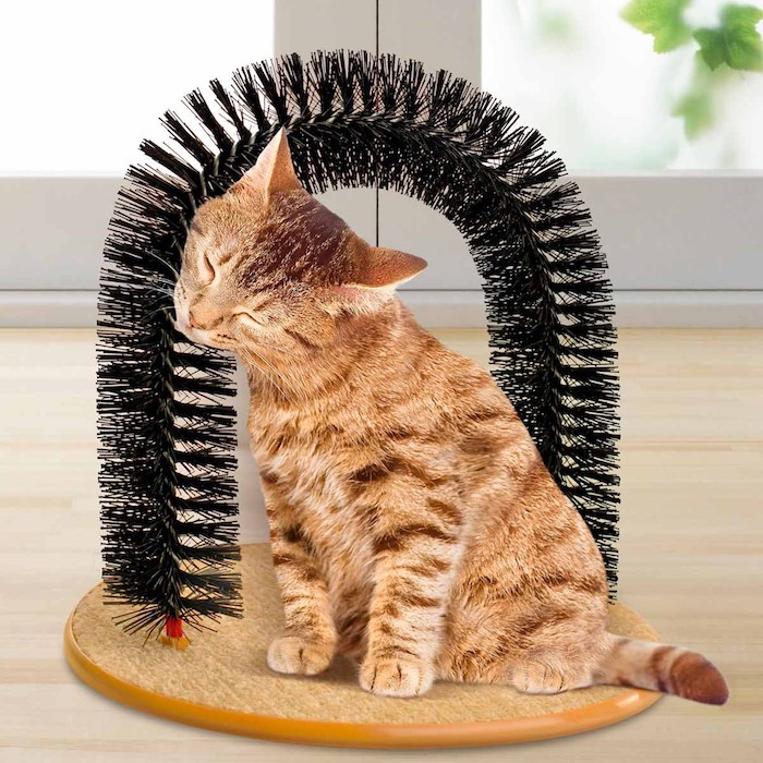 Gut bekannt ▷ 1001 + Ideen in inspirierenden Bildern für Katzenspielzeug CJ69