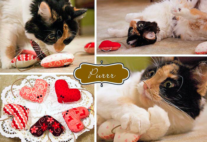 ▷ 1001 + Ideen wie Sie Katzenspielzeug selber machen
