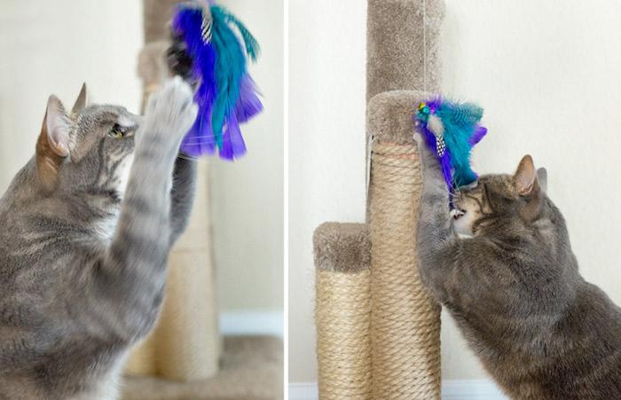 diy katzenspielzeug, graue katze die spielt, spielzeug mit blauen und lila federn, kratzbaum