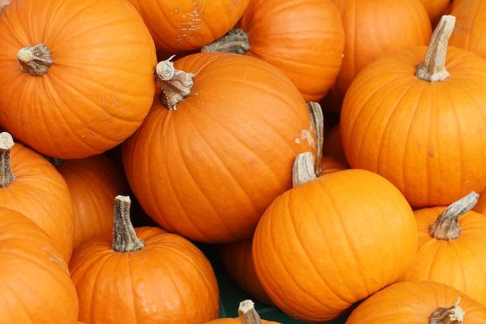 viele kleine und große orange kürbisse, halloween deko selber bastelin ideen, einen halloween kürbis schnitzen