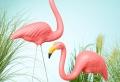 Flamingo Deko – so bringen Sie den Sommer in Ihr Zuhause!