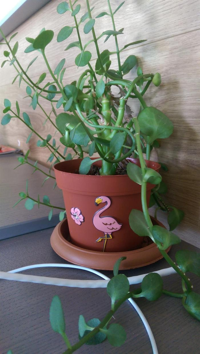 ein kleiner brauner blumentopf mit einer pflanze mit vielen grünen blättern und mit einer pinken blume und einer pinken flamingo