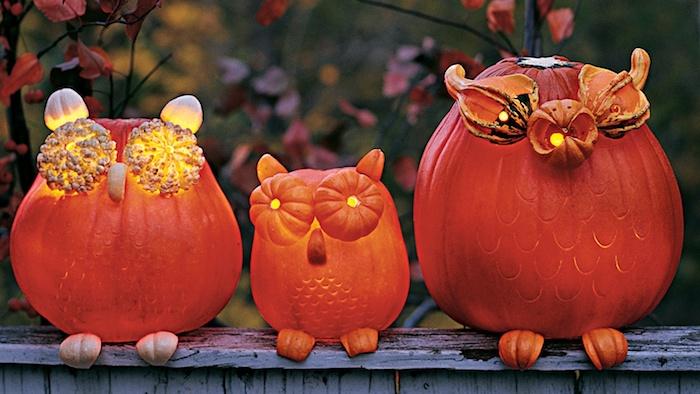 eulen basteln, drei kleine und große orange eulen aus orangen kürbissen und mit gelben augen aus kürbissen, colle kürbisgesichter