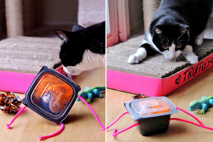 katzenspielzeug beschäftigung, katze in schwarz und weiß, selbstgemachtes spielzeug aus box, federn und ball