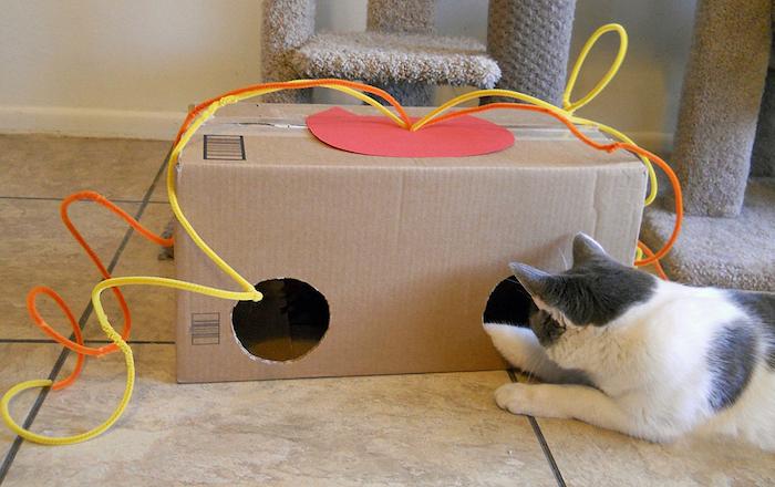 katzenspielzeug beschäftigung, große box aus pappe mit zwei löcher, katze in weiß und grau