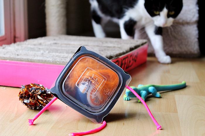 katzenspielzeug beschäftigung, schwarzer box gefüllt mit orangenfarbenen federn und kleinem ball