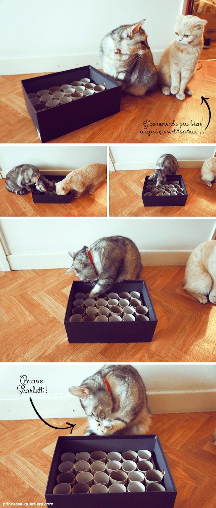 katzenspielzeug diy, basteln mit klorollen, große box mit papierrollen, zwei katzen, spielen
