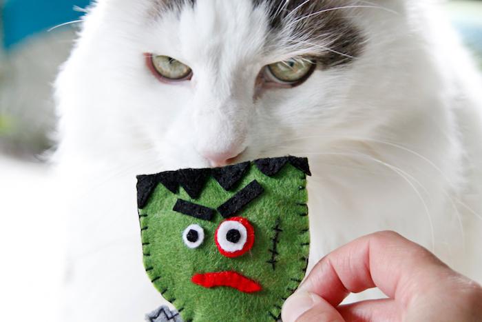 katzenspielzeug diy, weiße katze mit grünen augen, halloween, spielzeug zombie