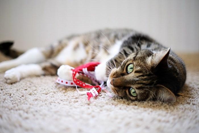 katzenspielzeug selber machen, qualle aus rotem wollfilz stoff, liegende katze mit grünen augen