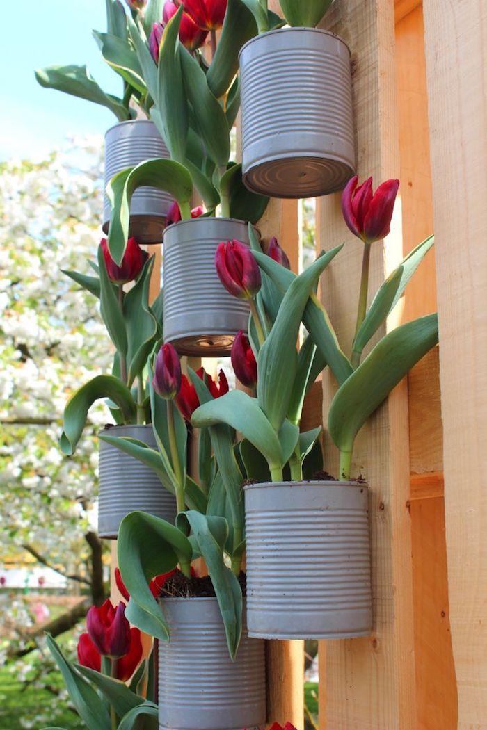 deko frühling, gartenzaun dekorieren, blumentöpfe aus konservendosen, rote tulpen
