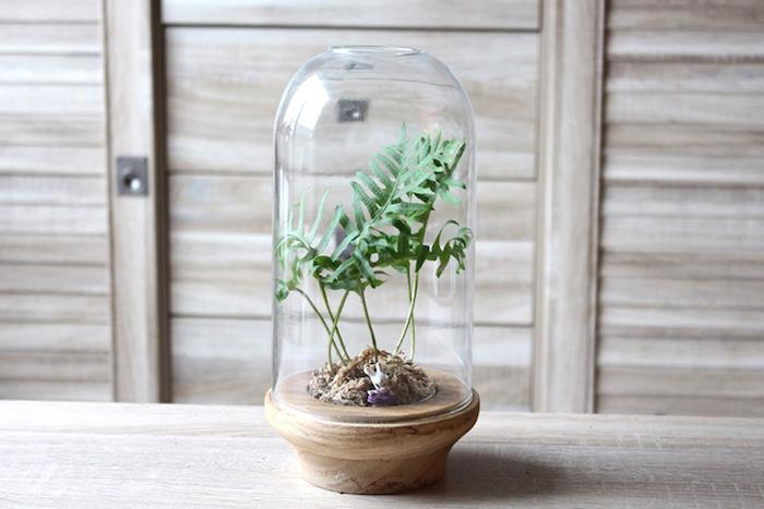 deko ideen selbst machen, terrarium selber bastteln, grüne pflanze, behälter aus holz und glas