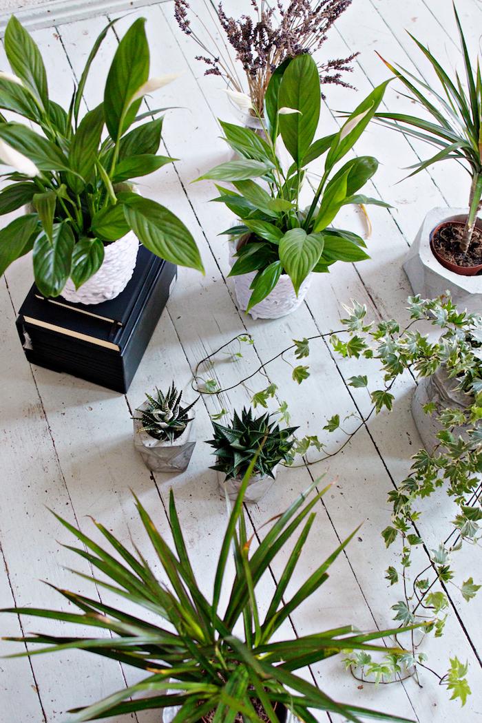 upcycling basteln diy, ein weißer boden aus holz und kleine weiße und große blumentöpfe mit kaktus und grünen pflanzen mit grünen blättern, recycling basteln