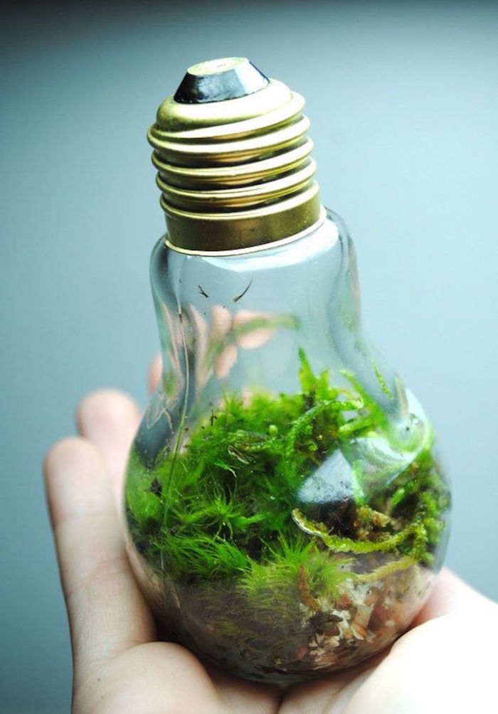 ein aquarium aus einer großen alten glühbirne und mit kleinen grünen pflanzen und eine hand, basteln recycling ideen