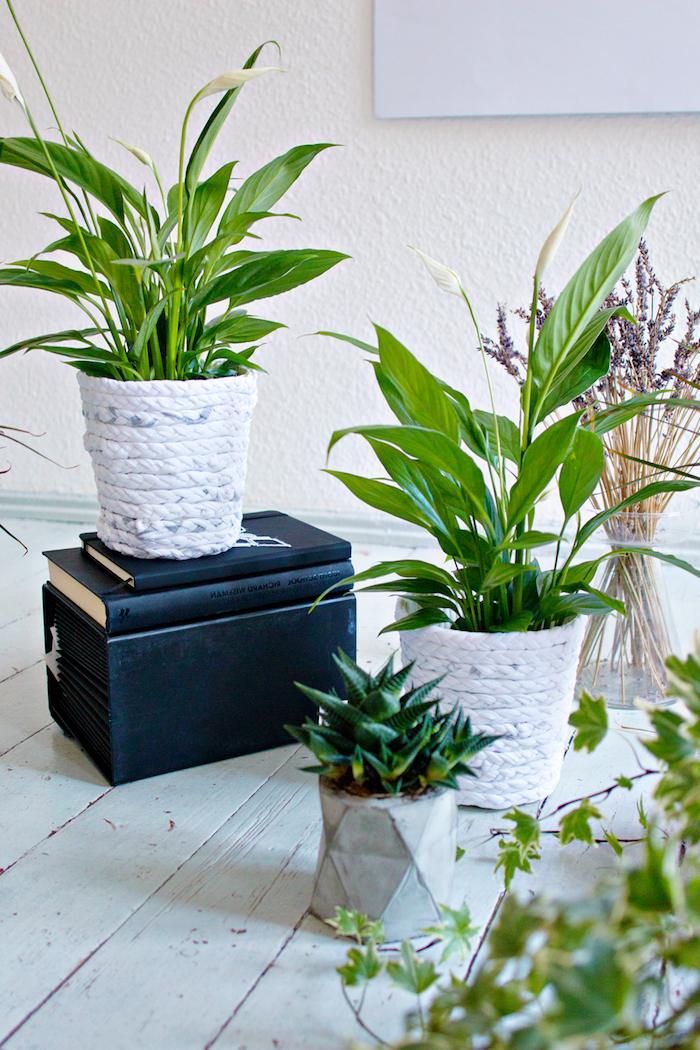 zwei bücher mit einem schwarzen bucheinband, ein weißer boden aus holz und kleine und große weiße blumentöpfe mit grünen pflanzen und mit langen weißen streifen aus einem alten weißen t-shirt