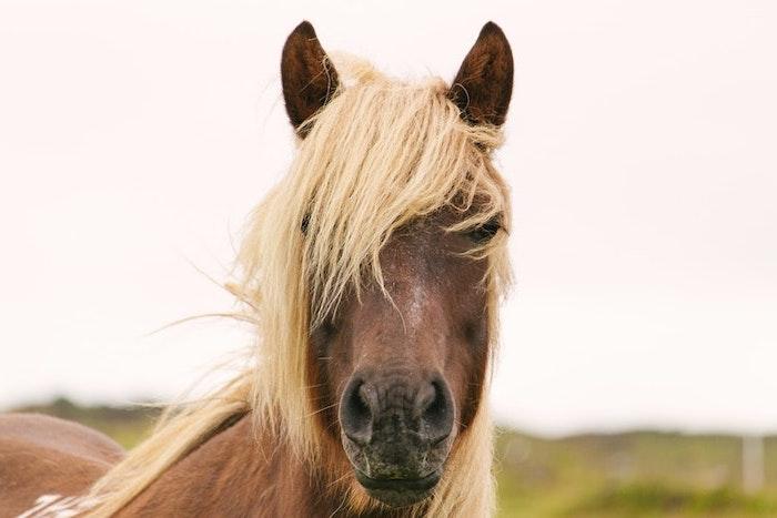 feines haar stylen, ein lustiges bild von einem pferd, blonde mähne braunes pferd foto