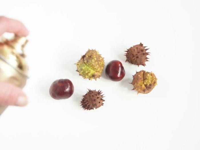 die Kastanien, wenn sie mit goldem Spray gefärbt werden, sechs Stücke, mit Kastanien basteln