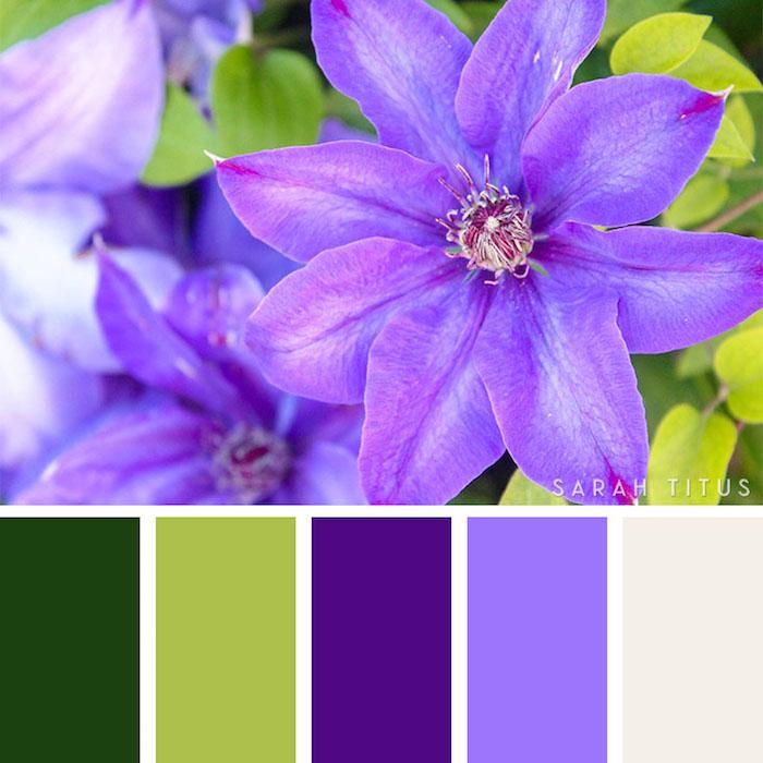 farbpalette grün, lila blumen, farbpalette selber machen, foto