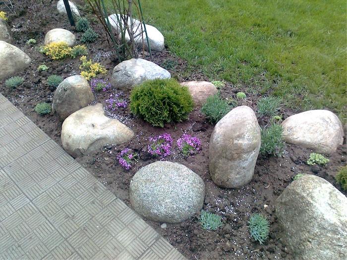 grauen gartenweg aus grauen fliesen, große graue steine für steingarten, kleine gelbe und violette blumen und grüne sukkulenten, steingarten bilder