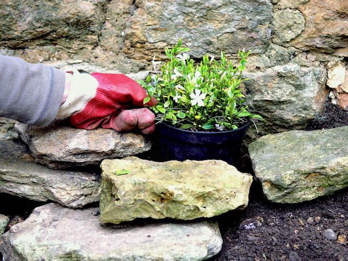 kleiner schwarzer blumentopf mit weißen blumen mit grünen . blättern und eine hand mit einem roten handschuh, einen steingarten anlegen