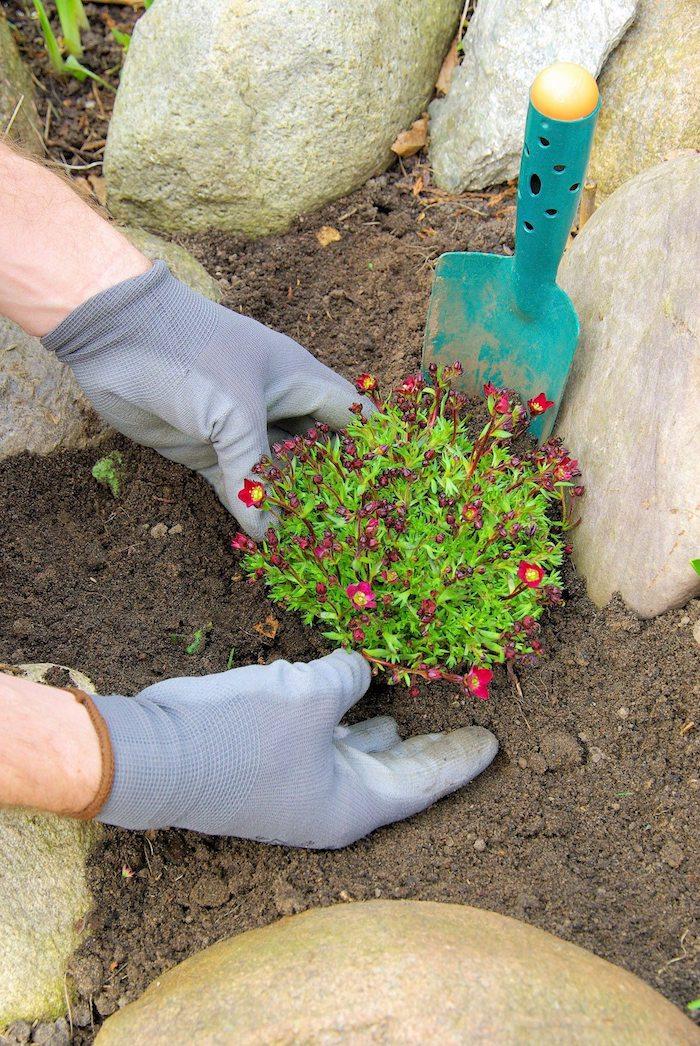 zwei hände mit grauen handschuhen und eine kleine rote blume mit grünen blättern, steingarten bilder, ein steingarten mit großen grauen steinen