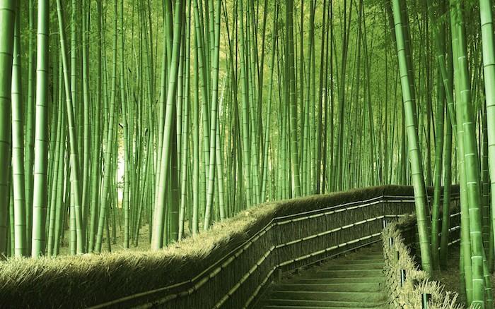 grüner garten mit einem grünen gartenweg und sichtschutz aus vielen grünen bambus stäben