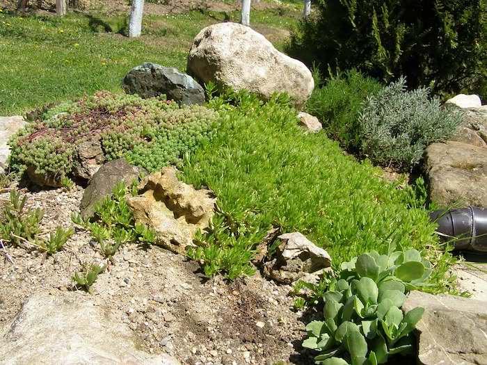steingarten mit grauen goßen steinen und vielen grünen sukkulenten mit grünen blättern, einen steingarten anlegen anleitung schritt für schritt