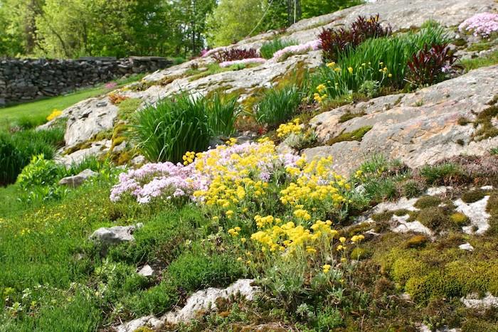 gartengestaltung mit steinen, kleinen gelben und violetten blumen und grünen sukkulenten, ein gartenzaun mit vielen grauen steinen