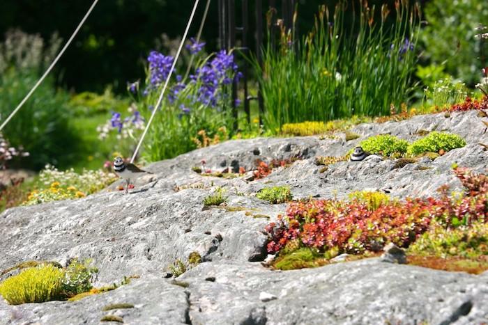 kleiner grauer vogel in einem kleinen steingarten mit grauen steinen nd grünen und roten sukkulenten und violetten blumen, pflanzen für steingarten