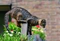 Der Gartenzaun – praktische und dekorative Abgrenzung für Ihr Grundstück