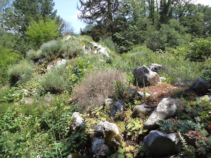 gartengestaltung mit kleinen steinen, ein kleiner steingarten mit großen weißen steinen und grünen und rotten sukkulenten pflanzen für steingarten, einen garten gestalten ideen