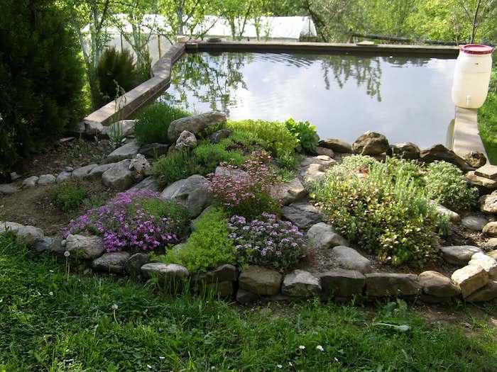 kleinen gatenteich anlegen im kleinen steingarten mit grauen steinen und violetten und gelben blumen und sukkulenten pflanzen, gartengestaltung mit steinen ideen