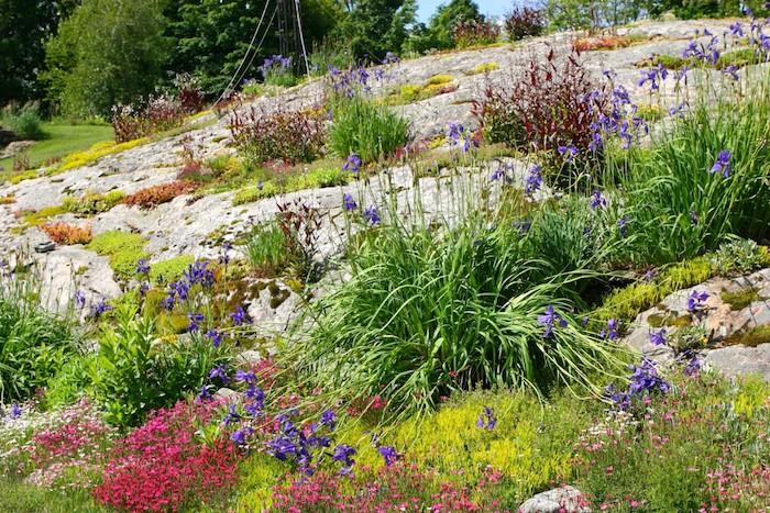 viele kleine violette und pinke blumen und sukulennten pflanzen im kleinen steingarten mit grauen steinen, einen steingarten anlegen