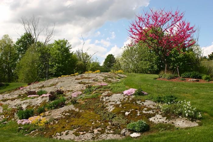 steingarten bilder und gartengestaltung ideen, blauer himmel mit vielen weißen wolken, ein kleiner steingarten mit gelben und violetten blumen und grünen sukkulenten pflanzen